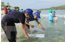 Thả gần 600.000 con giống tái tạo nguồn lợi thủy sản Vịnh Nha Trang