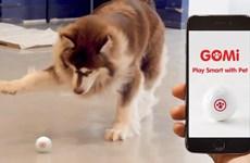 Hàn Quốc phát triển đồ chơi công nghệ cho thú cưng