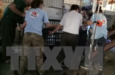 Nghệ An: Chuyển giao 3 cá thể gấu bị nuôi nhốt trái phép