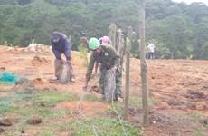 Lâm Đồng: Giải tỏa 'trang trại' giữa rừng thông Đà Lạt