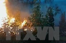 Xử lý nghiêm các hành vi gây cháy rừng ở tỉnh Phú Yên