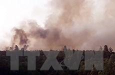 Quảng Nam: Dập tắt hoàn toàn cháy rừng keo ở huyện Hiệp Đức