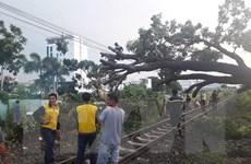 Đường sắt Bắc-Nam tê liệt nhiều giờ do cây đổ chắn ngang đường ray