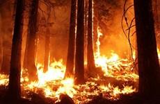 Nga ban bố tình trạng khẩn cấp về cháy rừng tại Siberia và Viễn Đông