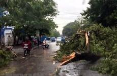 Lâm Đồng: Mưa lốc làm đổ nhiều cây, hư hỏng phương tiện giao thông