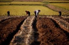 Liên hợp quốc cho phép EU viện trợ máy nông nghiệp cho Triều Tiên