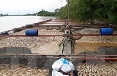 Hỗ trợ khẩn cấp người dân bị ảnh hưởng tại vùng lũ Đồng Nai