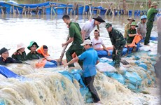 Đắk Lắk: Cơ bản khắc phục được sự cố vỡ đê bao Quảng Điền