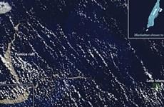 Nuôi cấy thành công san hô Đại Tây Dương trong phòng thí nghiệm