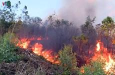 Phú Yên: Cơ bản dập tắt các đám cháy rừng trồng tại xã Hòa Định Tây