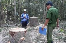 Khởi tố vụ án hình sự vụ cưa trộm gỗ tại Khu rừng phòng hộ Dầu Tiếng