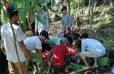 Yên Bái: 4 người thương vong do sạt lở đất khi đi bóc quế