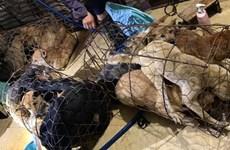Bắt giữ 30 nghi phạm trong đường dây trộm chó ở Thanh Hóa