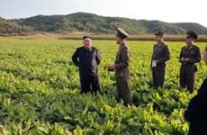 Triều Tiên kêu gọi người dân đẩy mạnh sản xuất sau thiên tai