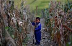 Thu hoạch vụ mùa của Triều Tiên năm 2019 thấp nhất trong 5 năm