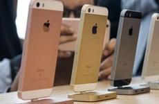 Chuyên gia: iPhone SE2 có thể giúp Apple tăng doanh số vào đầu năm sau