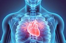 Nhà khoa học Nhật Bản muốn thử nghiệm chữa bệnh tim bằng tế bào gốc