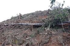 Đắk Nông: Tạm giữ hình sự 5 đối tượng đầu độc rừng thông
