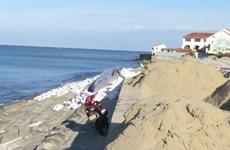 Quảng Nam: Luồng Cửa Đại bồi lấp nặng, tàu thuyền khó vào tránh bão