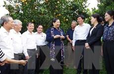 Phó Chủ tịch Quốc hội thăm mô hình trồng cam tại Hòa Bình