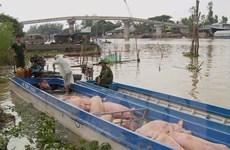 Quản lý thị trường siết chặt kiểm tra, ngăn chặn nhập lậu lợn