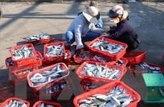 Quảng Trị hướng dẫn ngư dân ghi nhật ký, khai báo hải sản khai thác