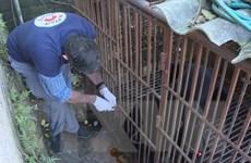 Cứu hộ một cá thể gấu ngựa nuôi nhốt gần 30 năm ở Sơn La
