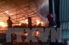Bình Dương: Kịp thời khống chế vụ cháy lớn ở nhà máy gỗ