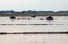 Cấp nước cho vụ Đông-Xuân 2020 gặp nhiều khó khăn