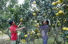 Bí thư chi bộ trẻ người Dao quyết tâm xóa nghèo cho thôn bản