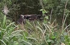 Xe bán tải lao xuống vực khiến 1 người chết, 3 người bị thương