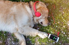 Spotify cung cấp dịch vụ phát nhạc cho thú cưng ở nhà một mình