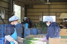 Tỉnh Ibaraki của Nhật Bản muốn tiếp nhận thêm thực tập sinh Việt Nam