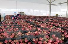 EVFTA - Cơ hội lớn cho xuất khẩu rau quả mở rộng thị trường