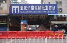 COVID-19 chưa chắc đã bắt nguồn từ chợ thủy sản Vũ Hán