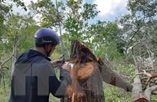 Kiểm điểm cá nhân để mất hơn 15.000ha đất lâm nghiệp ở Chư Prông