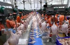 Sẵn sàng các điều kiện để xuất khẩu thịt gà sang Nga