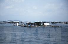 [Mega Story] Nuôi biển để phát triển bền vững nghề cá Việt Nam