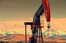 Nga không tăng sản lượng khai thác dầu, kêu gọi tìm giải pháp chung