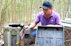 Quảng Ngãi: Lập biên bản vụ đập phá trại ong do sợ lây lan COVID-19