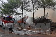 Bà Rịa-Vũng Tàu: Khống chế vụ cháy lớn tại kho chứa hạt điều và lúa mỳ