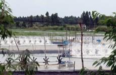 Kiên Giang: Hơn 4.200ha tôm nuôi bị thiệt hại do hạn mặn và dịch bệnh