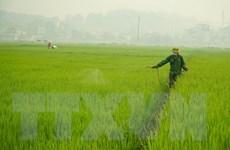 Phát hiện sớm, phòng trừ sâu bệnh gây hại lúa Đông Xuân