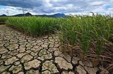 Bình Thuận công bố tình huống khẩn cấp do hạn hán cấp độ 2