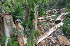 Ngang nhiên phá rừng ở khu vực giáp ranh giữa Đắk Lắk và Gia Lai