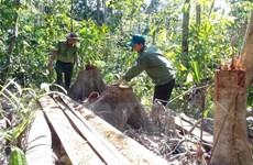 Điều tra, truy tìm thủ phạm mở đường để phá rừng tại Phú Yên