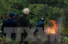 Đà Nẵng: Khống chế cháy rừng ở núi Sọ, gần 10ha rừng bị thiêu rụi