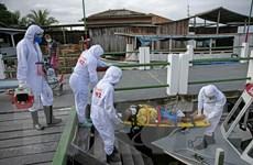 COVID-19 ở Mỹ Latinh: Brazil có số ca nhiễm mới cao nhất trong ngày