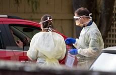 New Zealand không có ca nhiễm mới SARS-CoV-2 trong 11 ngày liên tiếp