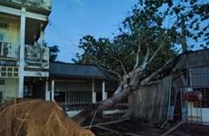 Cần Thơ: Dông lốc lớn hiếm gặp làm gãy trụ điện, cây xanh bật gốc